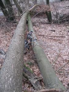 MTB zwischen Baumstämmen