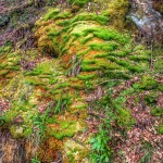 Loch Lomond - Moss